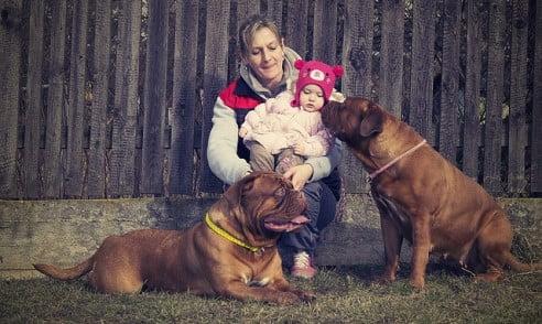 Dogue de Bordeaux (Fransız Mastiff) bir aile köpeği