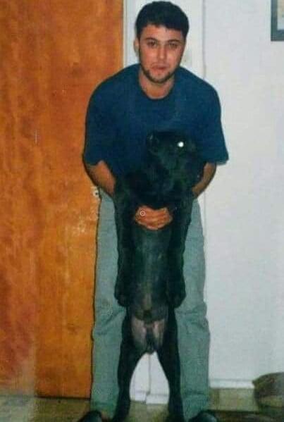 (1990) Napoliten Mastiff