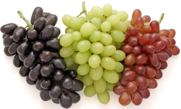 Köpeklere zararlı besinlerden biri de üzümdür.