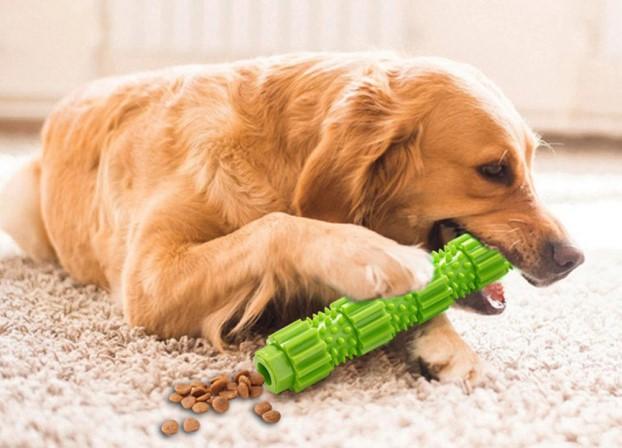 Diş kaşıma oyuncakları, köpeklerin eşyalara zarar vermesi sorununda yardımcı olabilir.