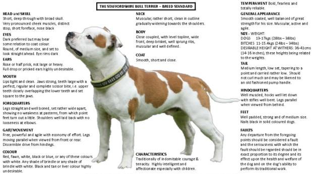 Kaliteli yavrular, ırk standardına uygun köpeklerden üretilir.