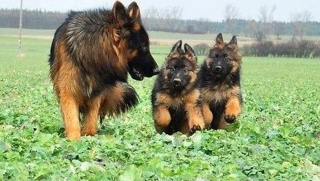 Köpekleri yaşam alanlarında görün.